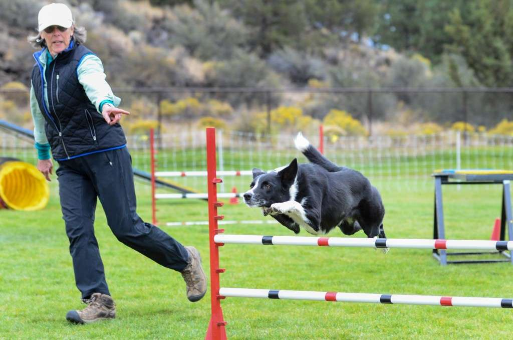 Focus PT client competing in dog agility